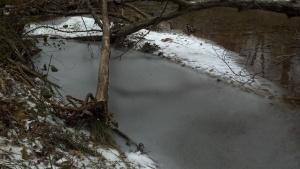 creek-clara