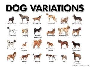 Dog Varieties