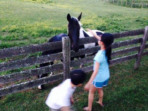 Clara and Andrew horses