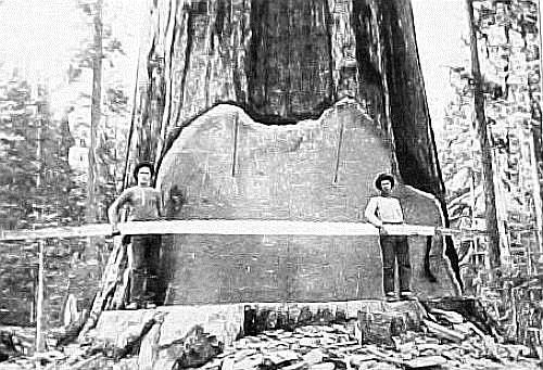 Logging 2