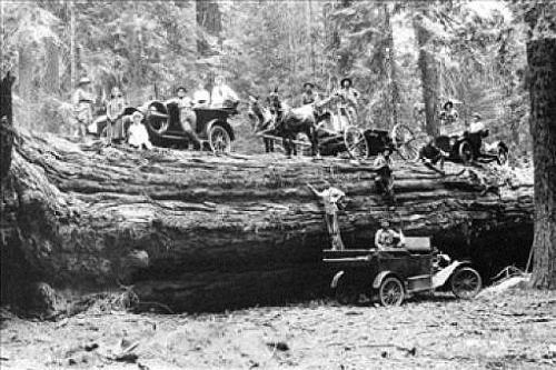 Logging 3